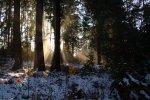 Wald bei Rummelsberg
